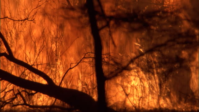 bushes silhouetted by flames burning on savanna. available in hd. - hd format stock videos & royalty-free footage