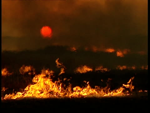 wa bushfire burns in foreground, with sun setting in smoke filled sky, heat haze - bush stock videos & royalty-free footage