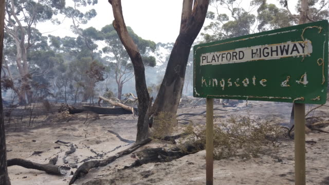 bushfire continues to smolder at the edge of the playford highway outside kingscote on january 10, 2020 on kangaroo island, australia. over 100,000... - forest stock videos & royalty-free footage