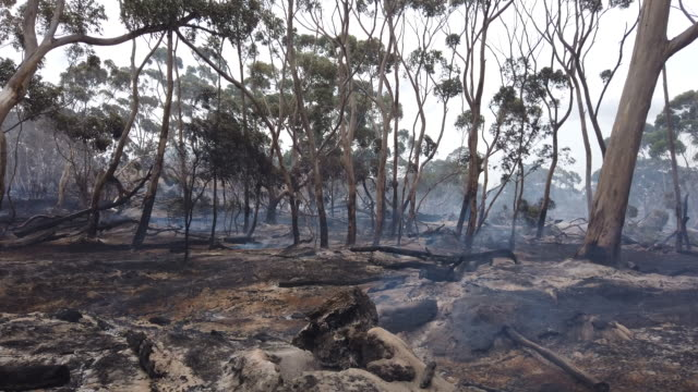 vidéos et rushes de a bushfire continues to smolder at the edge of the playford highway outside kingscote on january 10 2020 on kangaroo island australia over 100000... - australie