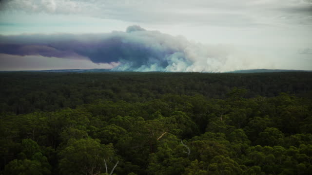 bushfire - tropical tree stock videos & royalty-free footage