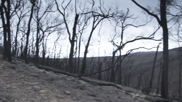 MS PAN of Bushland after bushfire / Melbourne, Victoria, Australia