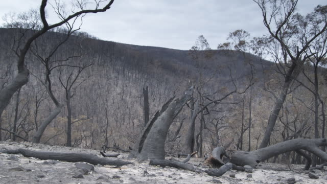 stockvideo's en b-roll-footage met ms bushland after bushfire / melbourne, victoria, australia - wildernis