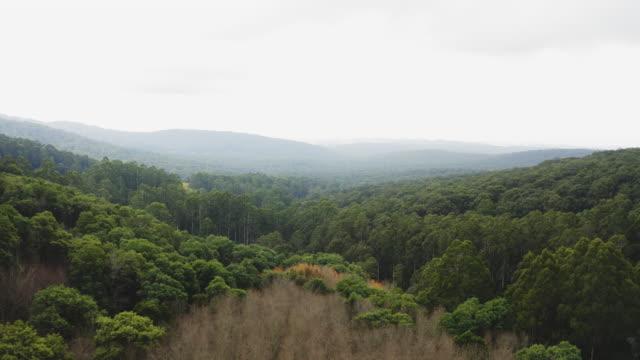 bushland in dandenong ranges australia - mountain range stock videos & royalty-free footage