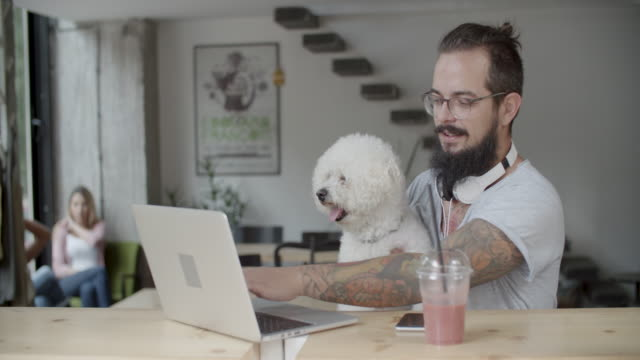 business - coworking - pet owner stock videos & royalty-free footage