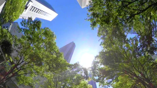 business district skyscrapers / green tree / look up at the sky - environmental conservation stock videos & royalty-free footage