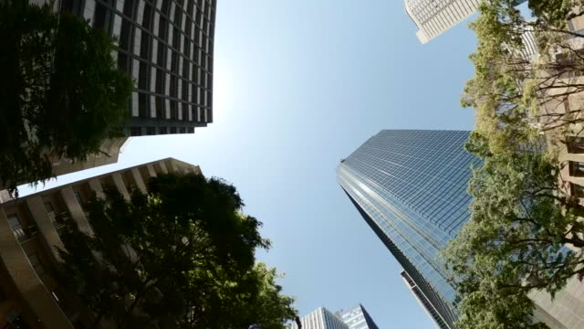 business district skyscrapers/ green tree - look up at the sky - low angle view stock videos & royalty-free footage