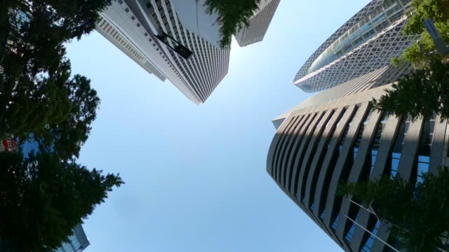 business district skyscrapers/ green tree - look up at the sky - headquarters stock videos & royalty-free footage