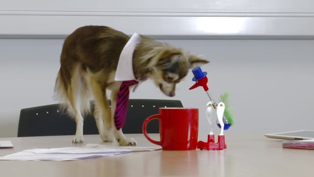 stockvideo's en b-roll-footage met business dog plays with drinking bird - slinger van newton