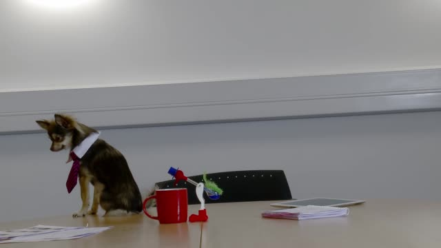 business dog sitting on boardroom table - schale stock-videos und b-roll-filmmaterial