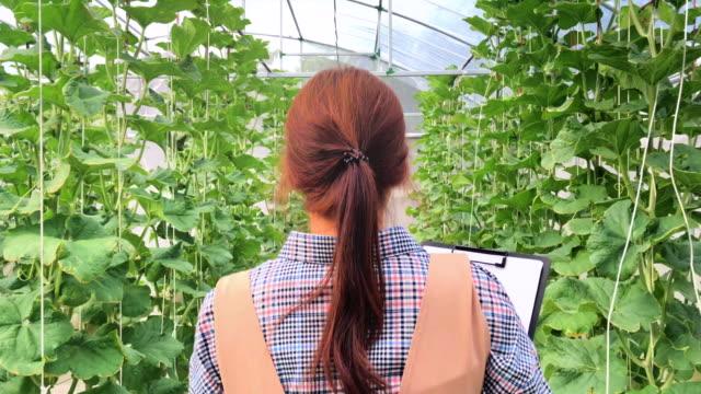 vídeos y material grabado en eventos de stock de verificación del propietario del negocio en la granja - empresa de carácter social