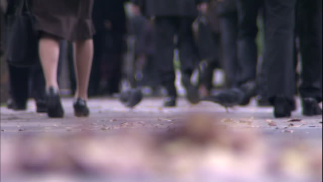 Business people walk past pigeons and fallen leaves as they walk to work.