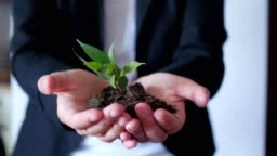 businessman holding small tree, sprout