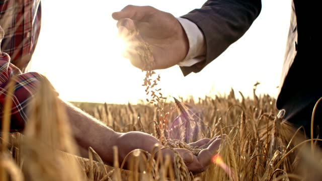 slo mo businessman pouring grains into farmer's hand - cereal plant stock videos & royalty-free footage