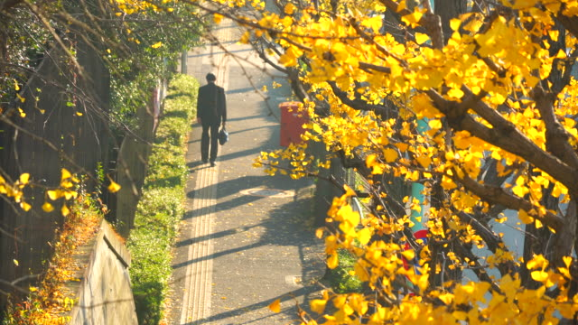 a businessman walks down along the ginkgo trees-lined street at yoyogihachiman shibuya tokyo japan on november 29 2017. late afternoon sunlight illuminates the autumn leaves and makes shadows on the sidewalk. - ginkgobaum stock-videos und b-roll-filmmaterial