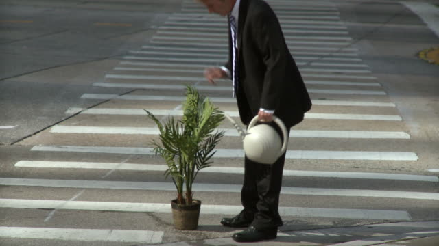 ms businessman watering plant in corner of crosswalk / south beach, florida, usa - zebra crossing stock videos & royalty-free footage