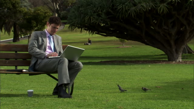 ms, businessman working on laptop in park, sydney, australia - full length stock videos & royalty-free footage