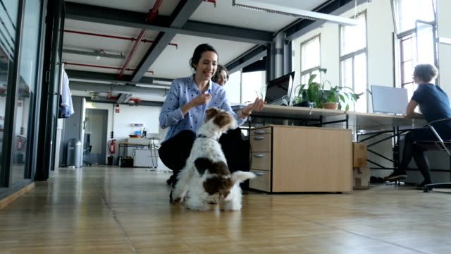 vídeos de stock, filmes e b-roll de empresária, brincando com o cão no escritório criativo - acariciar