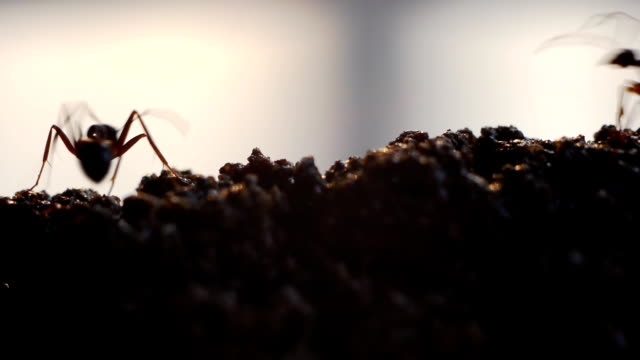 busy ants. - foraging stock videos & royalty-free footage