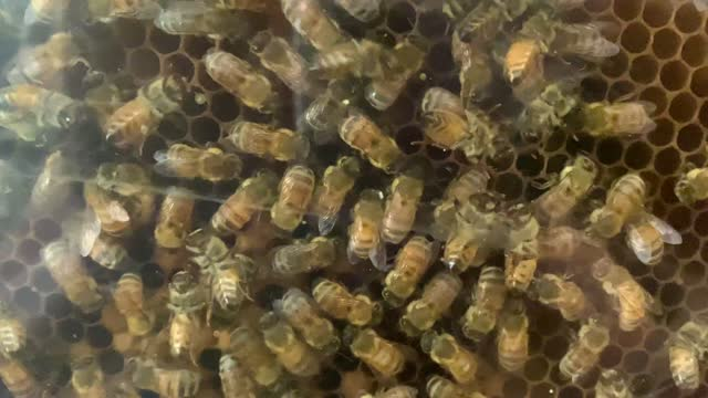 busy bees in hive honey comb - large group of objects stock videos & royalty-free footage