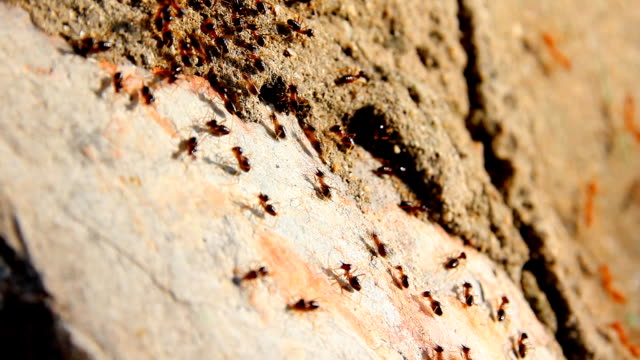 busy black ants walking on floor - ant stock videos and b-roll footage