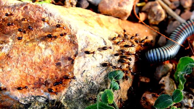 Busy Black Ants walking on floor