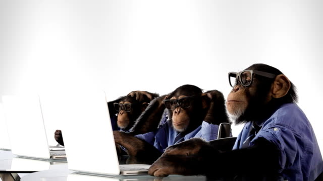 busy team monkey - chimpanzee stock videos & royalty-free footage