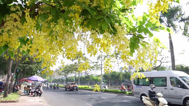 busy traffic at boulevard with cassia fistula flower foreground - boulevard stock videos & royalty-free footage