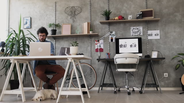 vídeos de stock e filmes b-roll de busy young freelancer working at home office - animal de estimação