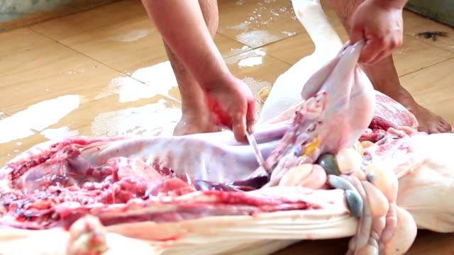 Butcher cut open entrails of whole pig