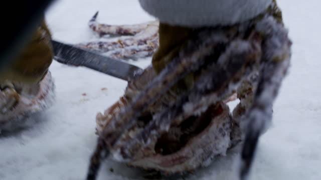 cu 屠本タラバかに - カニ捕り点の映像素材/bロール