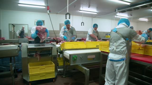 butchers work in a factory production line - tray stock videos & royalty-free footage