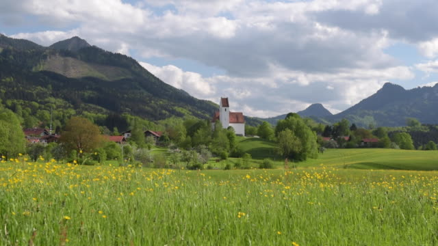 buttercup meadow and church at chiemgauer alps - meadow stock videos & royalty-free footage