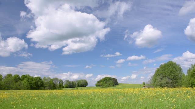 buttercup meadow at chiemgauer alps - bukettranunkel bildbanksvideor och videomaterial från bakom kulisserna