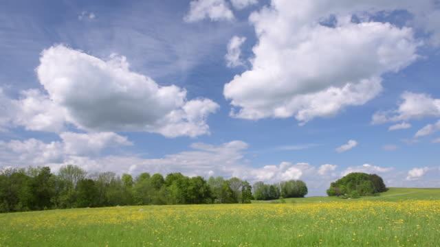 pan buttercup meadow at chiemgauer alps - bukettranunkel bildbanksvideor och videomaterial från bakom kulisserna