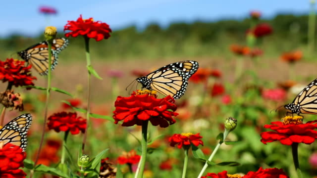 butterflies and flowers - butterfly insect stock videos & royalty-free footage