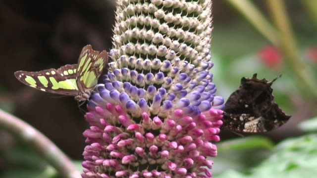 Butterflies and Tropical flower