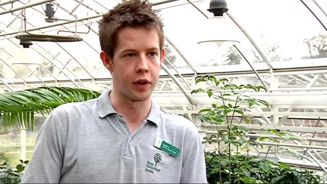butterflies at the royal horticultural society's gardens at wisley; matthew pottage interview sot reporter to camera cutaway butterfly pupae in... - 英国王立園芸協会点の映像素材/bロール