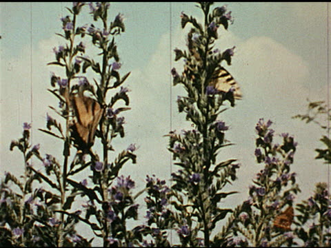/ butterflies flutter on various plants / microscope shots of microorganisms. - butterfly insect stock videos & royalty-free footage