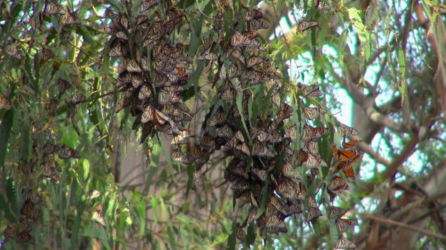 butterflies flying and landing on a tree branch - grove stock videos & royalty-free footage