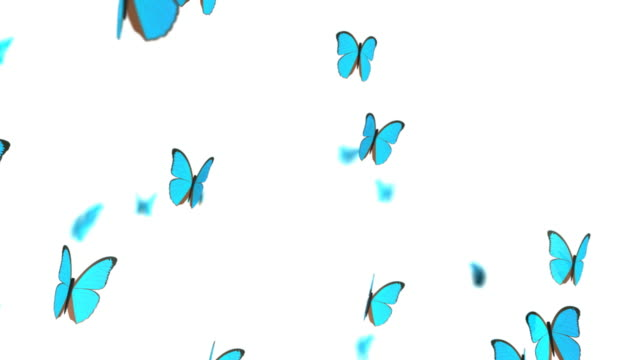 butterflies, hd+loop - butterfly stock videos & royalty-free footage
