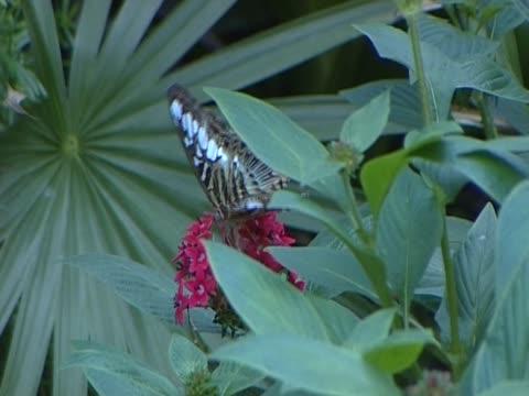 butterflies in kew gardens - wirbelloses tier stock-videos und b-roll-filmmaterial