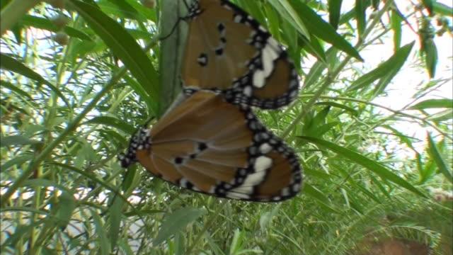 butterflies in shrubs - hamamatsu stock videos and b-roll footage