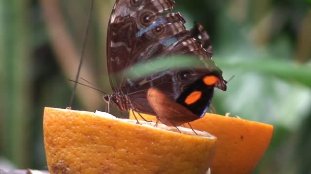 vídeos de stock e filmes b-roll de insectos em laranjas - invertebrado