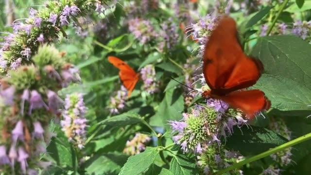 蝶 - ブンブン鳴る点の映像素材/bロール
