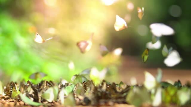 vídeos de stock, filmes e b-roll de borboletas - lepidóptero
