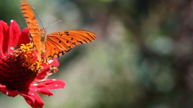 butterfly - 02