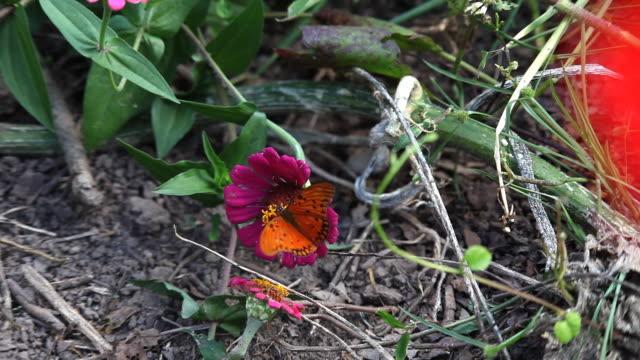 Schmetterling - 04