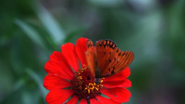 Schmetterling - 05