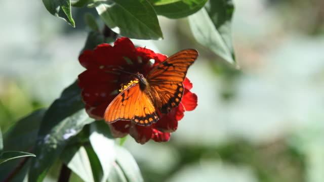 Schmetterling - 06
